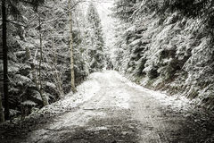 Path in winter forest. Stock Photos