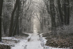 Path through the winter forest. Stock Images