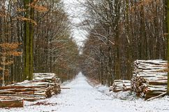 Path in a winter forest. With a logs on the side. Siek, Germany royalty free stock photo