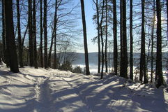 Path in winter forest. Pure snow and cold fresh air are the best in winter Royalty Free Stock Photo