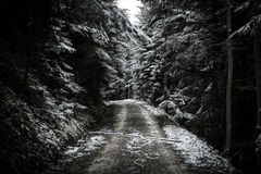 Path in winter forest. Royalty Free Stock Photos
