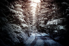 Path in winter forest. Royalty Free Stock Images