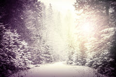 Path in winter forest. Stock Image