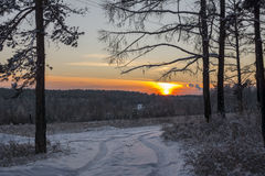 The path in winter forest at sunset Stock Image