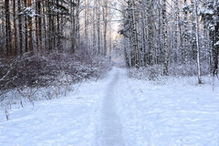 Path in winter forest Royalty Free Stock Photos