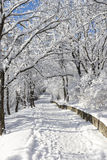 The path in winter forest. Royalty Free Stock Photography