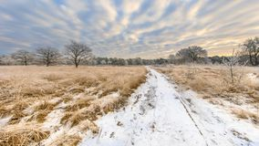Path through Winter heathland landscape panorama Assen Drenthe. Path through Winter heathland landscape panorama with snow and hoarfrost on grass and trees in Stock Photo