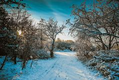 Path in winter landscape, Denmark. Snow covered path through trees in landscape in rural Denmark in winter royalty free stock photos
