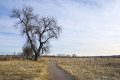 Path Through Winter Pasture Stock Photography
