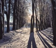 2 Path of winter Royalty Free Stock Photos