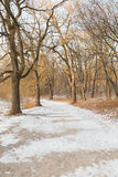 Path in the Winter with Snow and Trees Stock Image