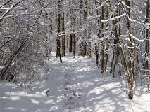 Path through the winter wood Royalty Free Stock Image