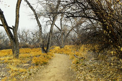 Path through winter woods. Stock Photos