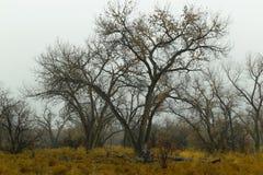 Path through winter woods. Royalty Free Stock Photos