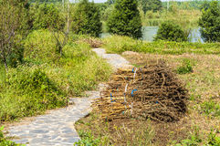 Path and withered grass Stock Images