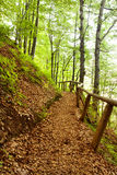 Path Wood. A Path Wood in early morning Royalty Free Stock Images