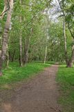 Path in wood. Royalty Free Stock Photos