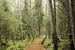 Path in the wood. Stock Photography