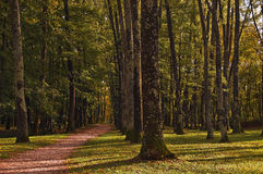 Path in the wood. Long path in a high trunks wood Royalty Free Stock Images