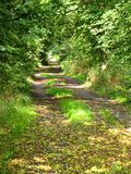 Path through the wood. A path through the wood in autumn Stock Photos
