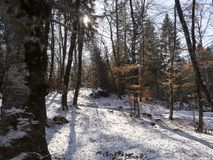 Path in the wood. Beautiful path in the wood. snow is every where and trees are naked and branches too Stock Photos