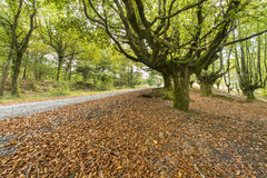 Path in the wood covered in leaves, Basque country, Spain. Stock Images