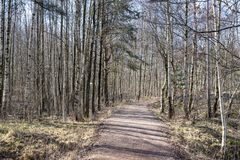 Path through the wood in early spring. In Sweden Stock Photo