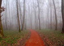 Path in a wood with fog. Red path leading into a wood covered by fog Stock Image