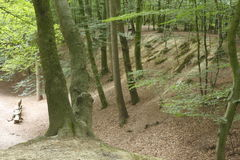 Path in a Wood,  Germany, Europe. Path in a Wood with tress,  Germany, Europe Stock Images