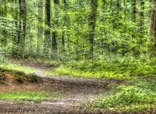 Path in a Wood,  Germany, Europe. Path in a Wood with tress,  Germany, Europe Stock Photo