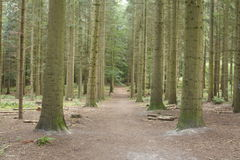 Path in a Wood,  Germany, Europe. Path in a Wood with tress,  Germany, Europe Stock Photography