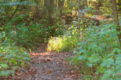 Path in the wood. Path in the green wood with blurred foreground and background Stock Image
