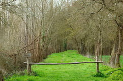 Path in a wood leading to the swamp. Path in a wood leading to the swamp of Glaugelas Stock Image