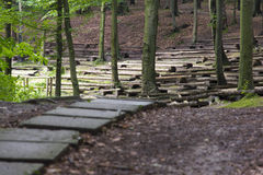 Path in the wood. Path of planks in the wood Royalty Free Stock Photography