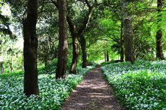 Footpath in wooded area along Dartington, Devon UK. Footpath in a wooded area in Devon U.K Stock Photo