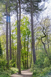 A path in a wooded area trees and lush foliage in the UK Royalty Free Stock Images