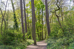 A path in a wooded area trees and lush foliage in the UK Royalty Free Stock Photo