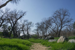 Path through Wooded Meadow Royalty Free Stock Photos