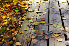 Path of wooden boards with colorful leaves on it in autumn. Royalty Free Stock Photo