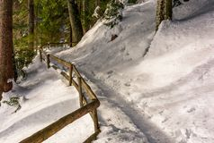 Path with wooden fence in winter forest. Lovely nature scenery Royalty Free Stock Photography