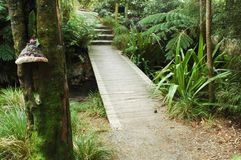 A path and wooden foot-bridge in a rain forest. A path leading across a wooden bridge and up some stone stairs in a rainforest. A large black and white fungus Royalty Free Stock Images