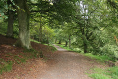 Path through woodland. Well maintained path through woodland Stock Image
