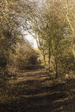 Path through Woodland Stock Photo