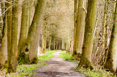 Path through woodland trees Stock Photo