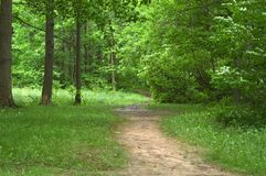 Path in the Woods. A hiking path in the Cleveland Metroparks Royalty Free Stock Photography