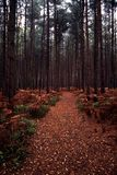 Path into the woods Royalty Free Stock Photos