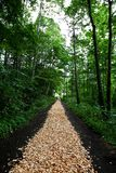 Path Through The Woods Stock Photos