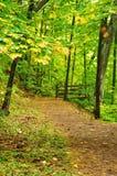 A Path Through the Woods Stock Photos