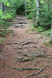 A path in the woods Stock Photography