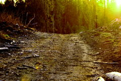 Path in the woods Royalty Free Stock Images